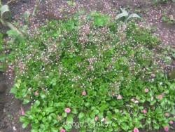 Какие цветы посадить на даче? - фото ВСЕ с карты 122.jpg