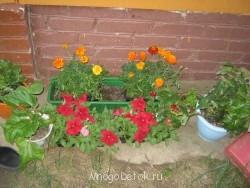 Какие цветы посадить на даче? - фото ВСЕ с карты 166.jpg