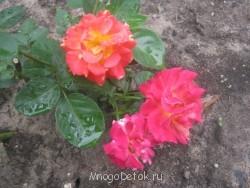 Какие цветы посадить на даче? - фото ВСЕ с карты 248.jpg
