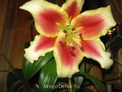 Какие цветы посадить на даче? - фото ВСЕ с карты 276.jpg