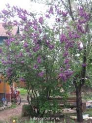 Какие цветы посадить на даче? - фото ВСЕ с карты 690.jpg