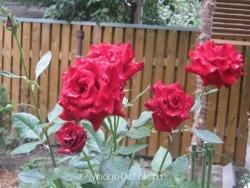 Какие цветы посадить на даче? - фото ВСЕ с карты 714.jpg