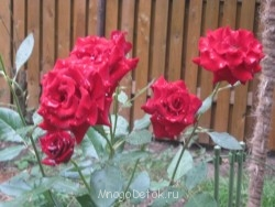 Какие цветы посадить на даче? - фото ВСЕ с карты 730.jpg