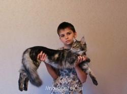 Котята мейн-кун не дорого - IMG_5323.JPG
