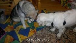 Поговорим о собаках. - 09012014538.jpg