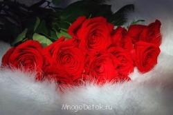 Летние цветочки 2015 - 41707533_0903.jpg