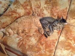 Пестренькая кошка нормальных размеров- для сравнения - image.jpg