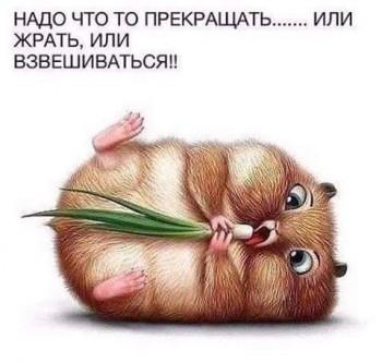 С юмором о диетах и иже - IMG_156406011000512.jpeg