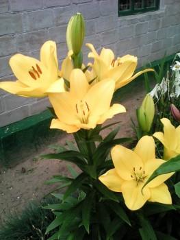 Какие цветы посадить на даче? - IMG_20160617_104006.jpg
