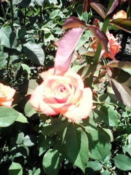 Какие цветы посадить на даче? - IMG_20160619_120012.jpg