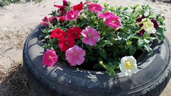 Какие цветы посадить на даче? - IMG_20160616_165755.jpg