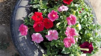 Какие цветы посадить на даче? - IMG_20160616_165817.jpg