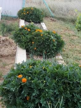 Какие цветы посадить на даче? - IMG_20160804_170456.jpg
