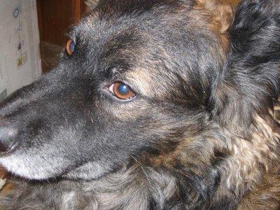 У собаки есть душа - дельфинарий 316.jpg