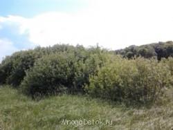 Участки для многодетных в Шустиково Болото  - 2013-06-05 15.07.46.jpg